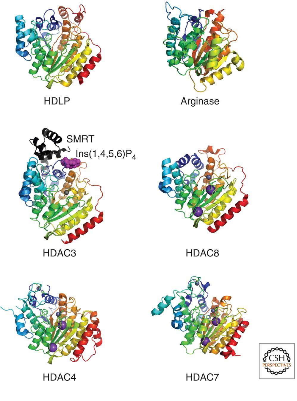 HDAC Structures