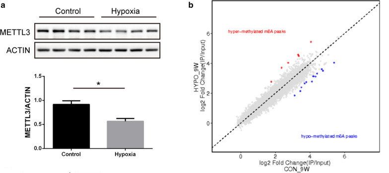 m6A methylation following postnatal hypoxia in 9-week-old  rats