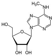 m6A n6-methyladenosine structure