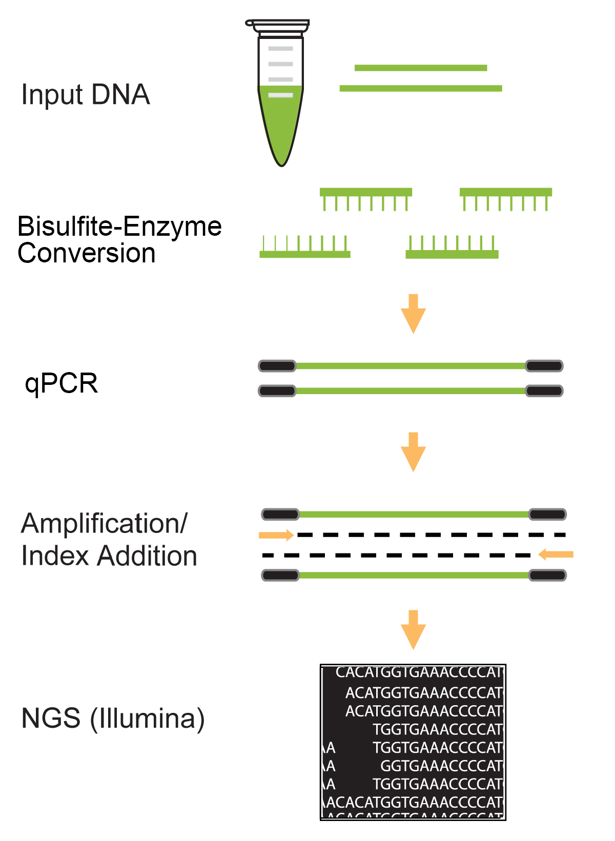 DNA Bisulfite Conversion | EpiGentek