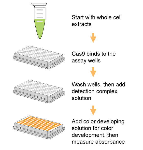 EpiQuik CRISPR/Cas9 Assay ELISA Kit (Colorimetric)