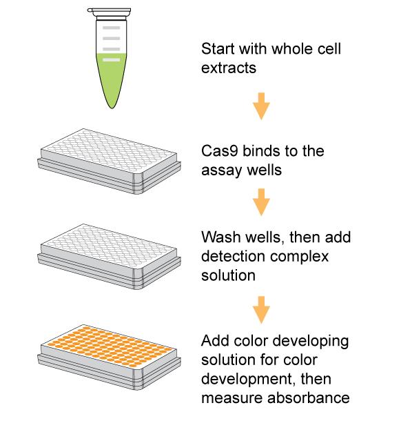 EpiQuik CRISPR/Cas9 Assay ELISA Kit (Colorimetric)