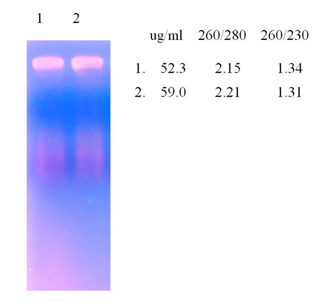 epiquik total rna isolation kit tissue epigentek