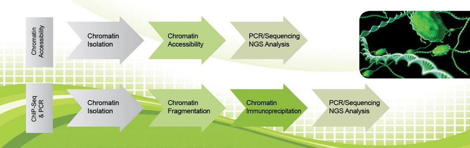 Chromatin Studies