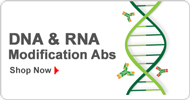 DNA & RNA Modification Abs