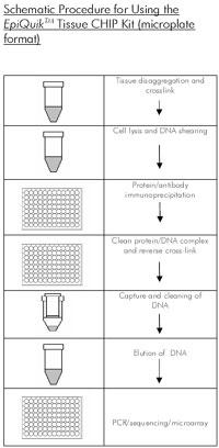 中国生物器材网--组织染色质免疫沉淀(chip)试剂盒