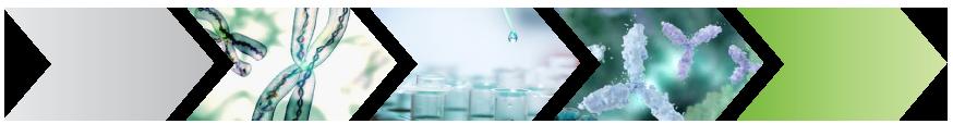 Chromatin Immunoprecipitation (ChIP) Epigenetic Services