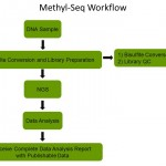 Methyl-Seq Workflow for Methyl-Seq Service