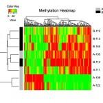 Methylation Heatmap for Methyl-Seq Service
