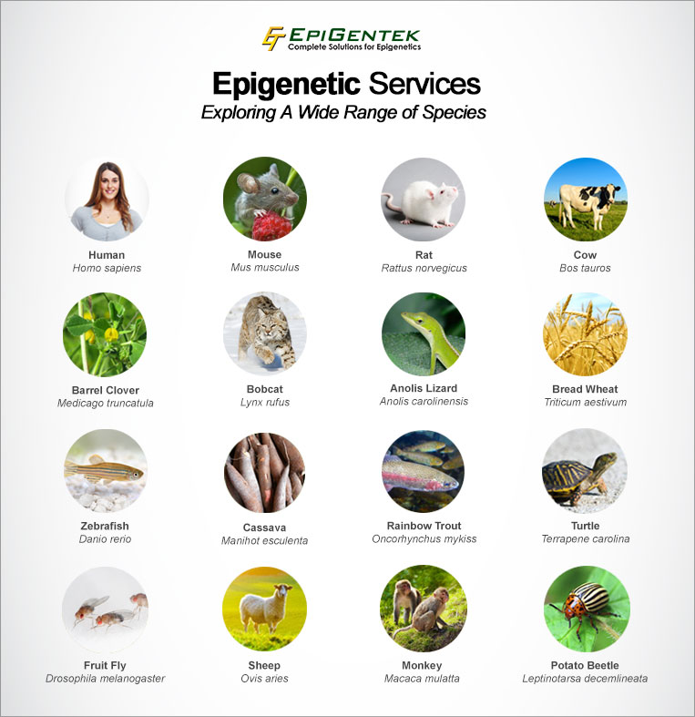 Epigenetic Services Species Tested